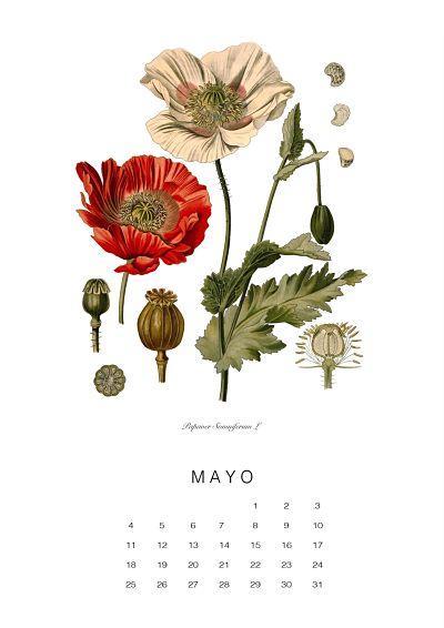 calendario-planthae5