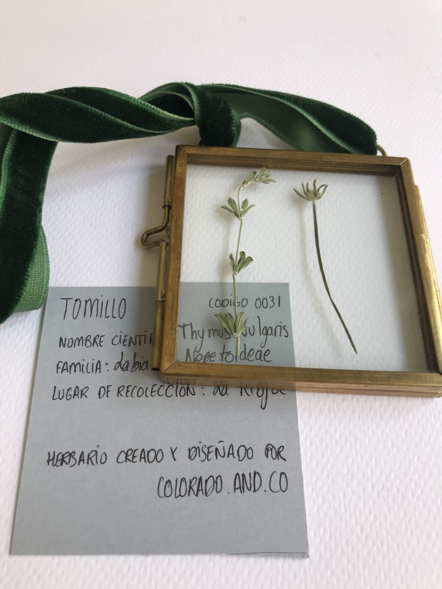 tomillo6
