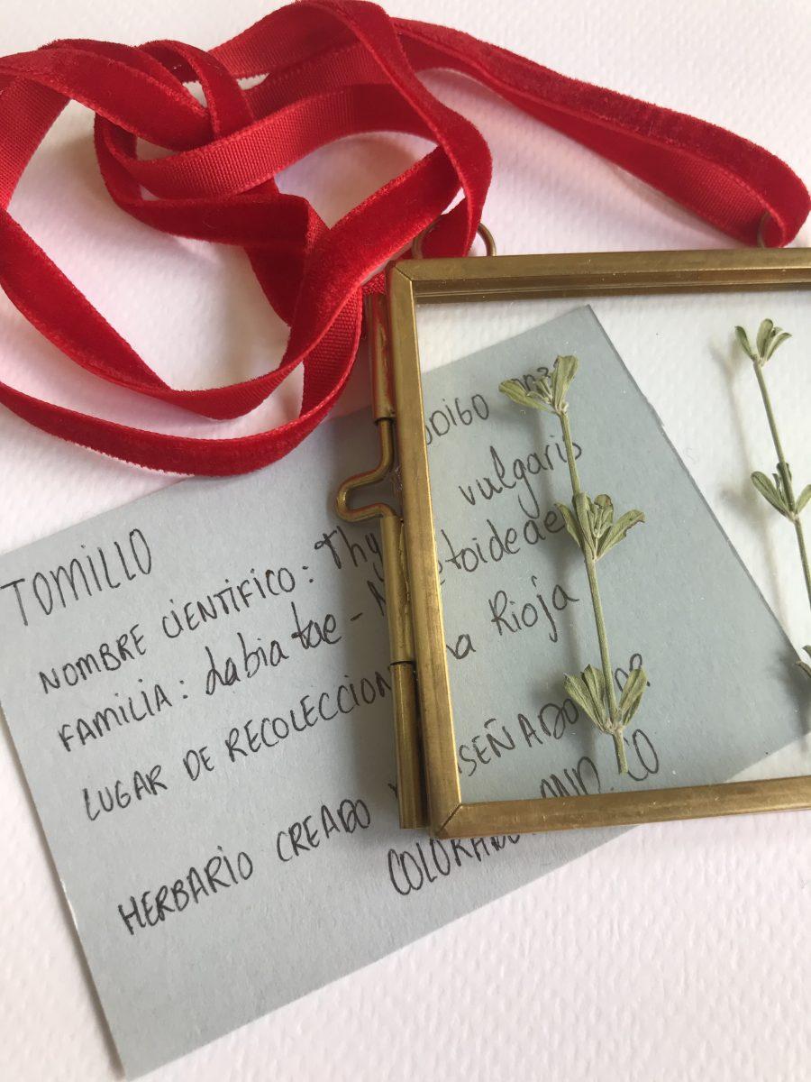 tomillo5